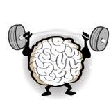 Dar certo do cérebro Fotografia de Stock