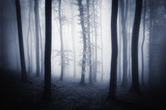 Dar ethereal mysterious forest with fog Royalty Free Stock Photos