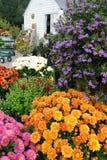 Dar la bienvenida al jardín y a crisantemos de la cabaña Imagen de archivo libre de regalías