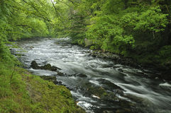 Dard de rivière Photo stock