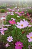 darden blommor Royaltyfria Foton