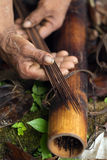 Dardos do Amazonas reais Imagens de Stock Royalty Free