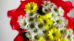 Dare il fiore bianco e giallo della margherita stock footage