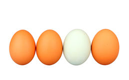 DARE TO BE DIFFERENT. Different than the rest - alone - egg Royalty Free Stock Photo