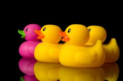 Dare to be different - rubber ducks on black Royalty Free Stock Photo