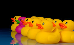 Dare to be different - rubber ducks on black Stock Photography