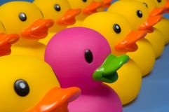 Dare To Be Different - Rubber Ducks On Blue Royalty Free Stock Photo
