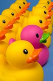 Dare To Be Different - Rubber Ducks On Blue Royalty Free Stock Photos