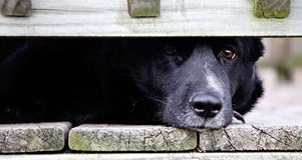 Dare una occhiata al cane Immagine Stock
