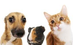 Dare una occhiata del cane e del gatto Immagini Stock Libere da Diritti