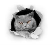 Dare una occhiata del gatto Immagini Stock