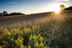 Dare una occhiata a Sun Immagini Stock Libere da Diritti