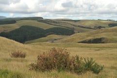 Dargaville-Landschaft Stockfoto
