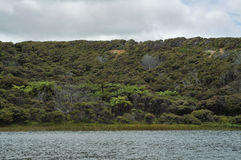 Dargaville-Landschaft Lizenzfreie Stockfotografie