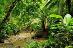 Darien djungel Arkivfoto