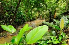 Darien jungle royalty free stock photo
