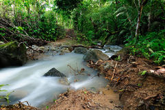 Darien jungle in Central America Royalty Free Stock Photography