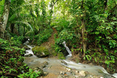 Darien jungle Royalty Free Stock Photo
