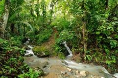 Darien jungle. Wild Darien jungle near Colombia and Panama border. Central America Royalty Free Stock Photo