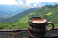 darjeeling的茶 图库摄影