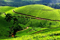 Darjeeling image. Beautiful tea garden of darjeeling Stock Image