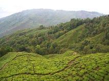 Darjeeling, INDIA, il 15 aprile 2011: Vista aerea dal cabl fotografia stock libera da diritti