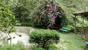 Darjeeling przy kopalną wiosną Zdjęcie Stock