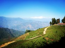 Darjeeling. Tea farms view hills Stock Images