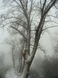 Dark. Tree on the forest Royalty Free Stock Photography
