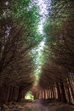 Dark alley through the forest Stock Photography