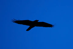 Dark angel on the horizon Stock Photos