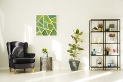 Dark armchair in living room. Dark armchair next to metal table and ficus in living room interior with green painting Royalty Free Stock Photos