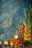 Dark autumn background from autumn leaves. autumn background with copy space. stock photography
