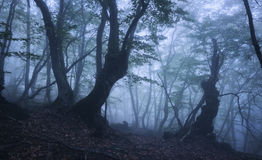 Dark autumn forest in fog. Beautiful natural landscape. Royalty Free Stock Images