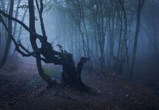 Dark autumn forest in fog. Beautiful natural landscape. Royalty Free Stock Photography
