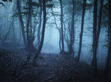 Dark autumn forest in fog. Beautiful natural landscape. Royalty Free Stock Photo