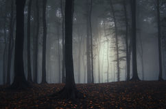 Dark autumn forest with mysterious fog Royalty Free Stock Images
