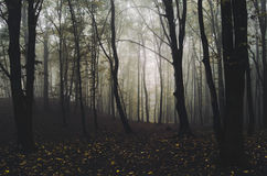 Dark autumn forest after rain Royalty Free Stock Images