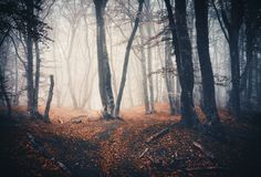 Dark autumn forest with trail in fog. Fall woods royalty free stock photos