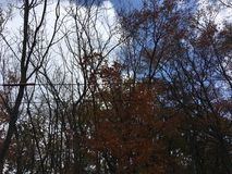 Dark autumn trees, blue sky. Vladivostok countryside, nature in early autumn Royalty Free Stock Photo