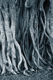 Dark background tree roots Stock Image