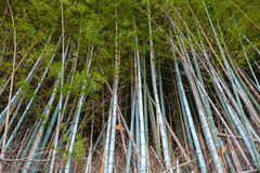 Dark bamboo forest, natural background stock images