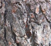 Dark bark background photo manipulation Stock Images