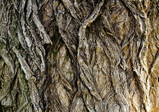 Dark Bark Texture Royalty Free Stock Images