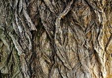 Dark Bark Texture. Ancient Dark Bark Texture detail macro close up Royalty Free Stock Images