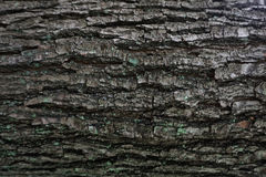 Dark bark tree texture Royalty Free Stock Images