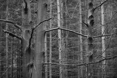 Dark beech forest Stock Images