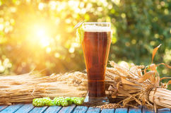 Dark beer in a glass on natural background. Dark beer in a glass,malt, barley ears and cone hop. natural background, alcohol Stock Photos