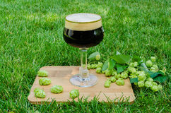 Dark beer with hops on grass Royalty Free Stock Photos