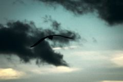 Dark bird in dark clouds royalty free stock photos